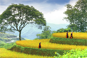 Vietnam travel deals